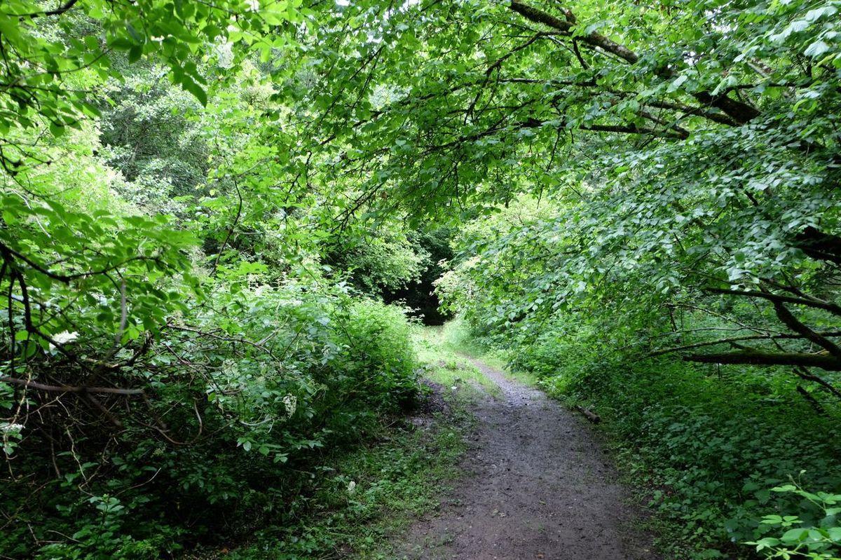 """Une marche sur ce sentier avec Claire à la recherche de """" la clairière ensoleillée """" ?"""