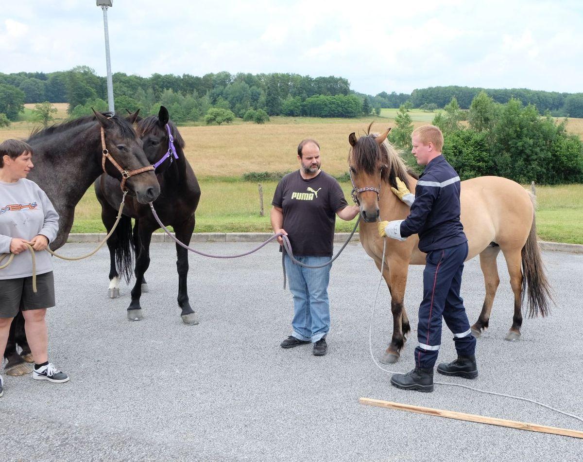 Formation animalière au centre de sapeurs-pompiers