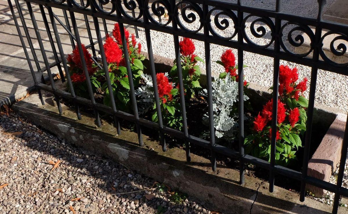 Fleurissement des jardinières municipales