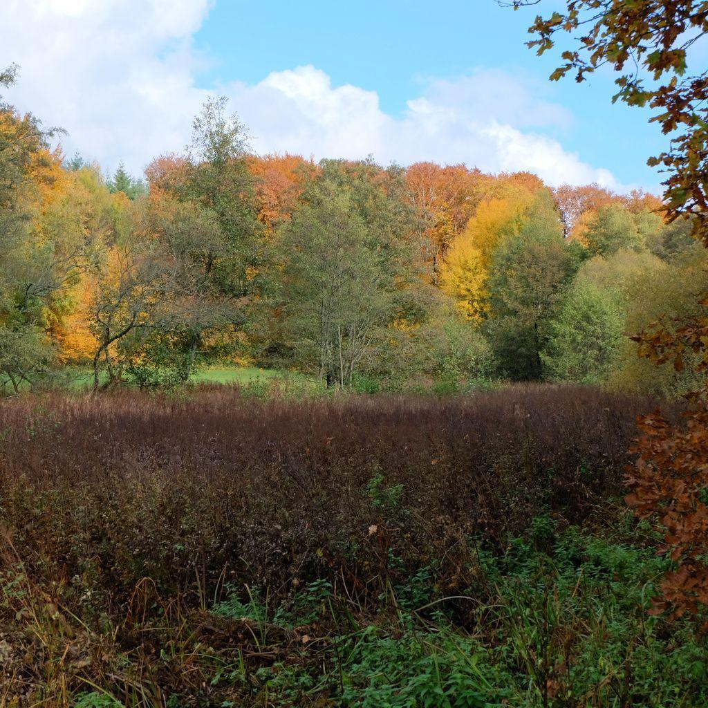 L'étang Lallemand