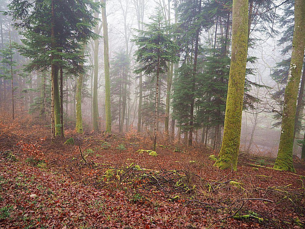 La Colause dans le brouillard
