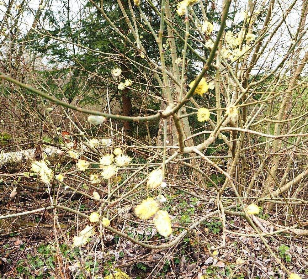 Le printemps arrive à la Basse des Orges