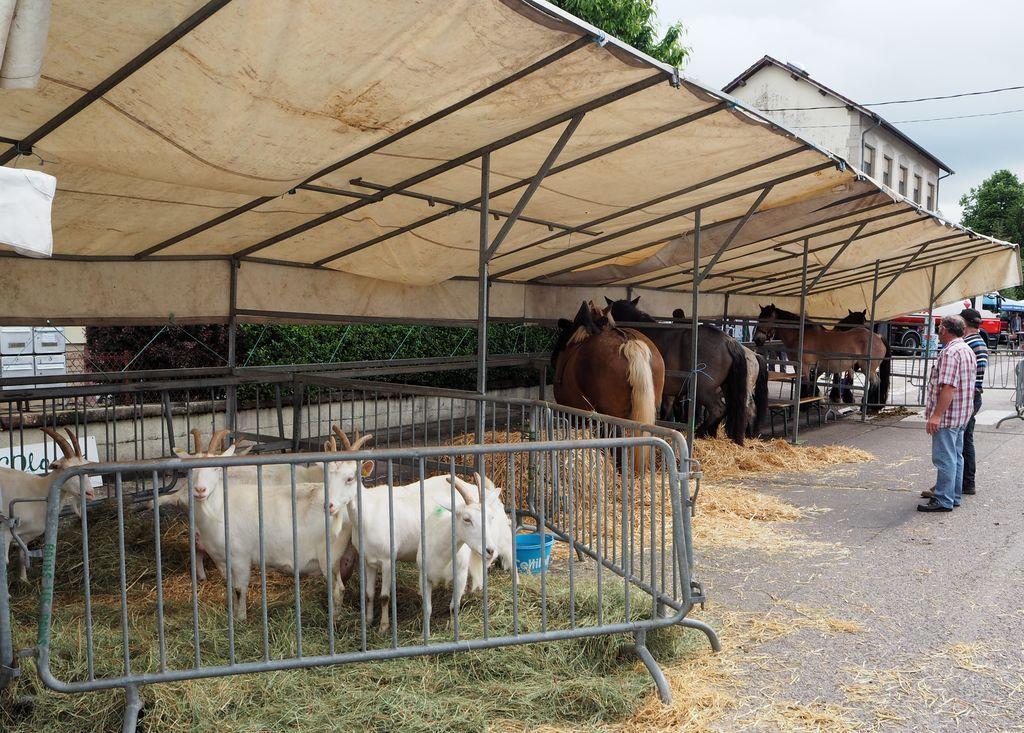 Comice agricole à Bains les Bains