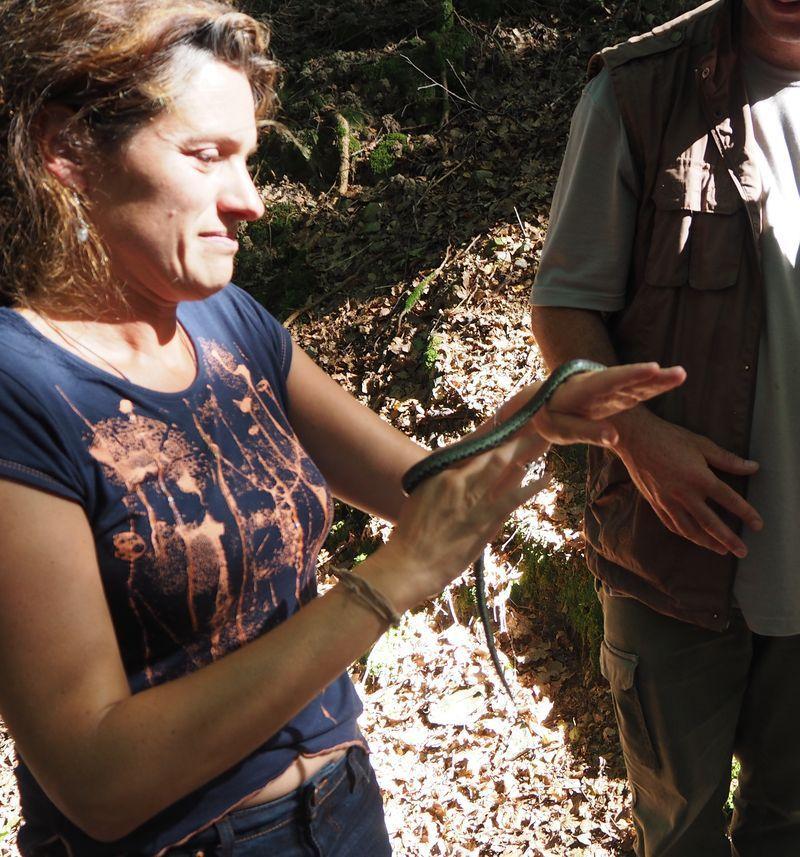 Journée Reptiles avec l'Eaudici