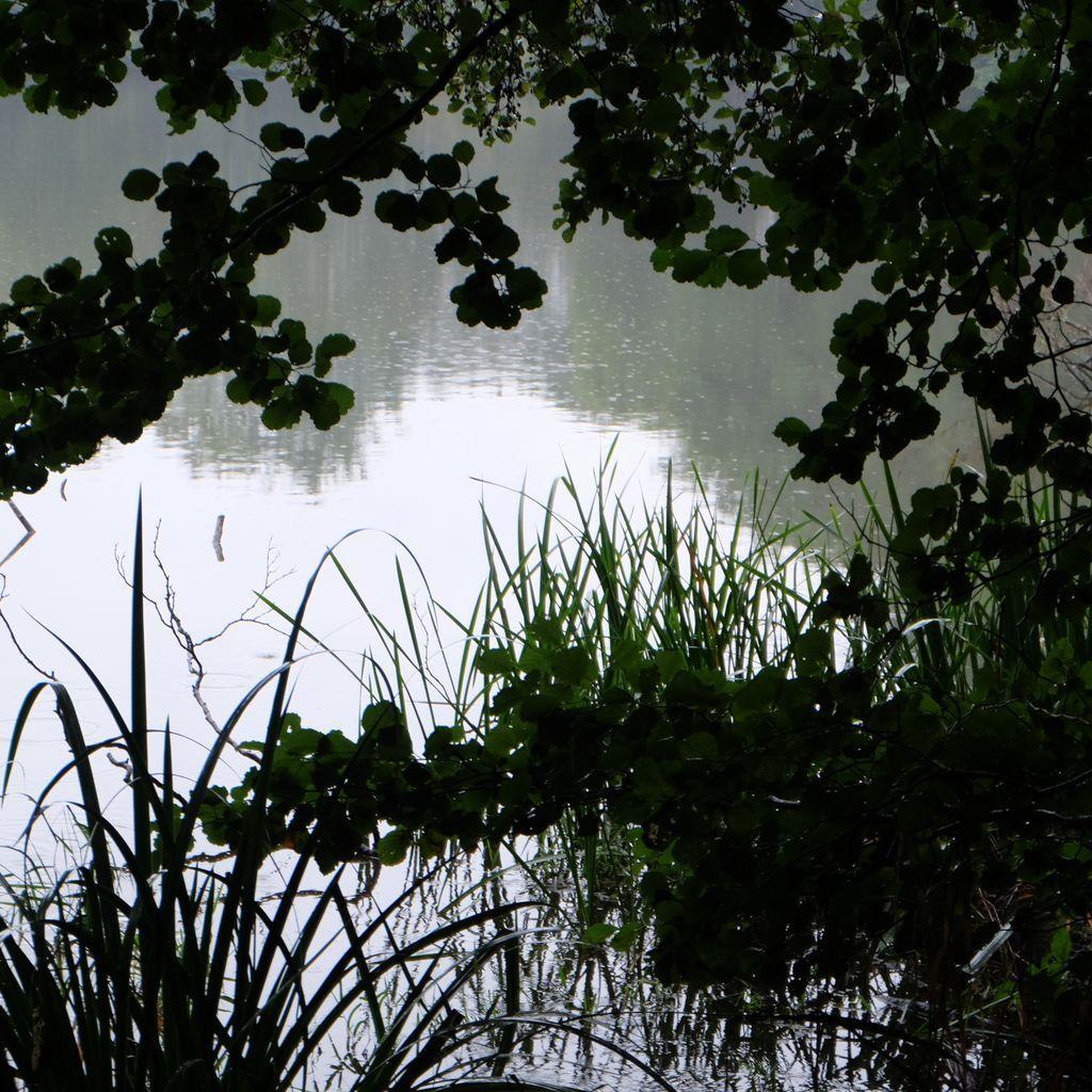 L'étang Lallemand sous la pluie