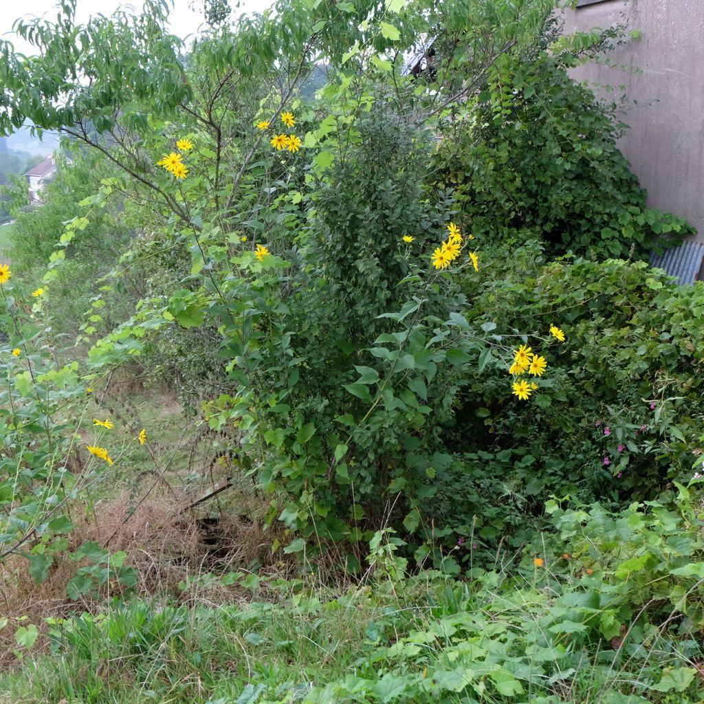 Le Village, jardin abandonné