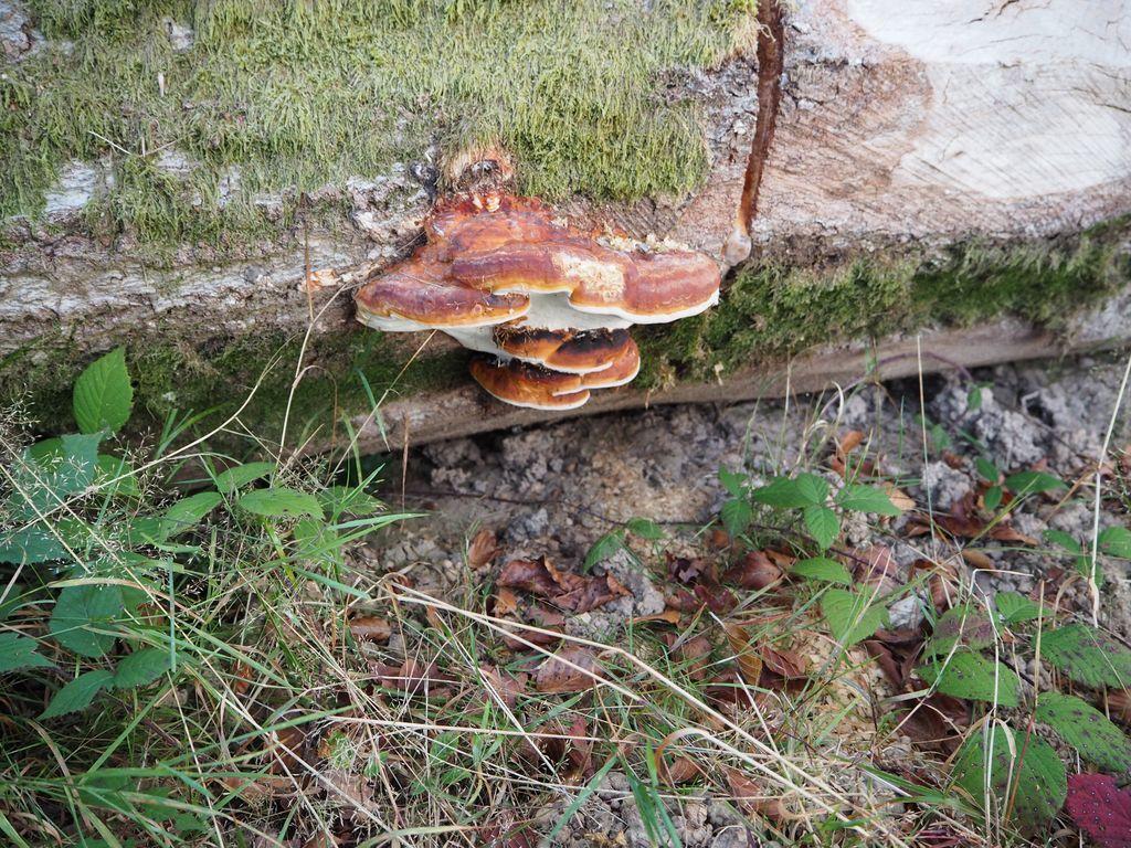 Où sont passsés les champignons ?