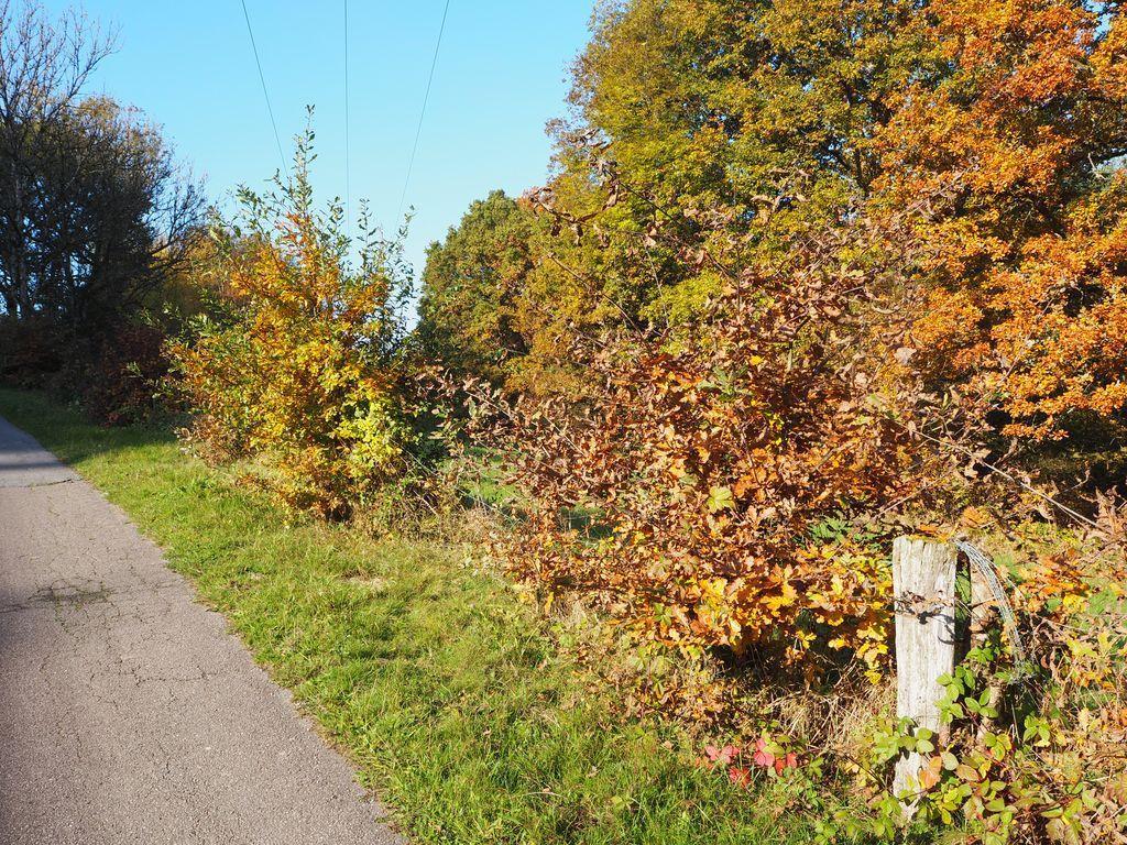 L'automne à la Basse des Orges