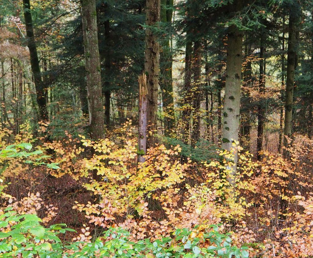 La Colause à l'automne