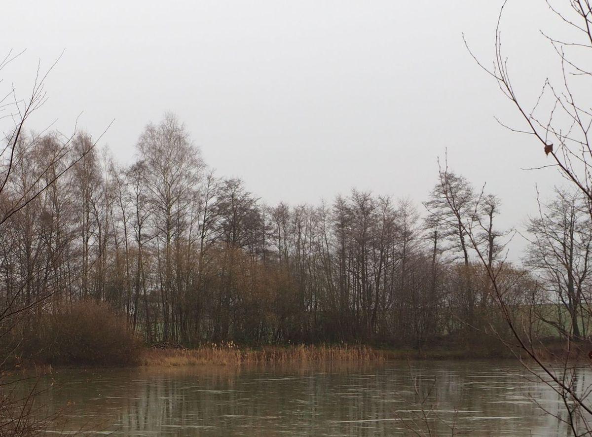 Etangs gelés au Grand Bois