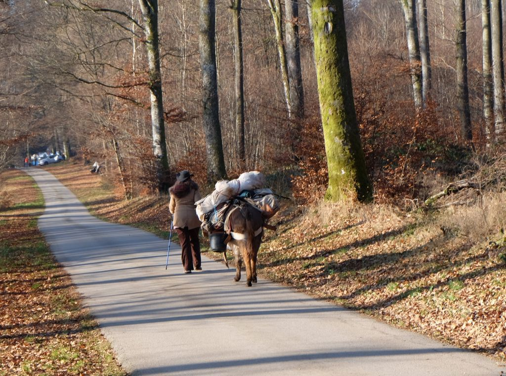 Diana arrive au Marché de Noël avec son âne.