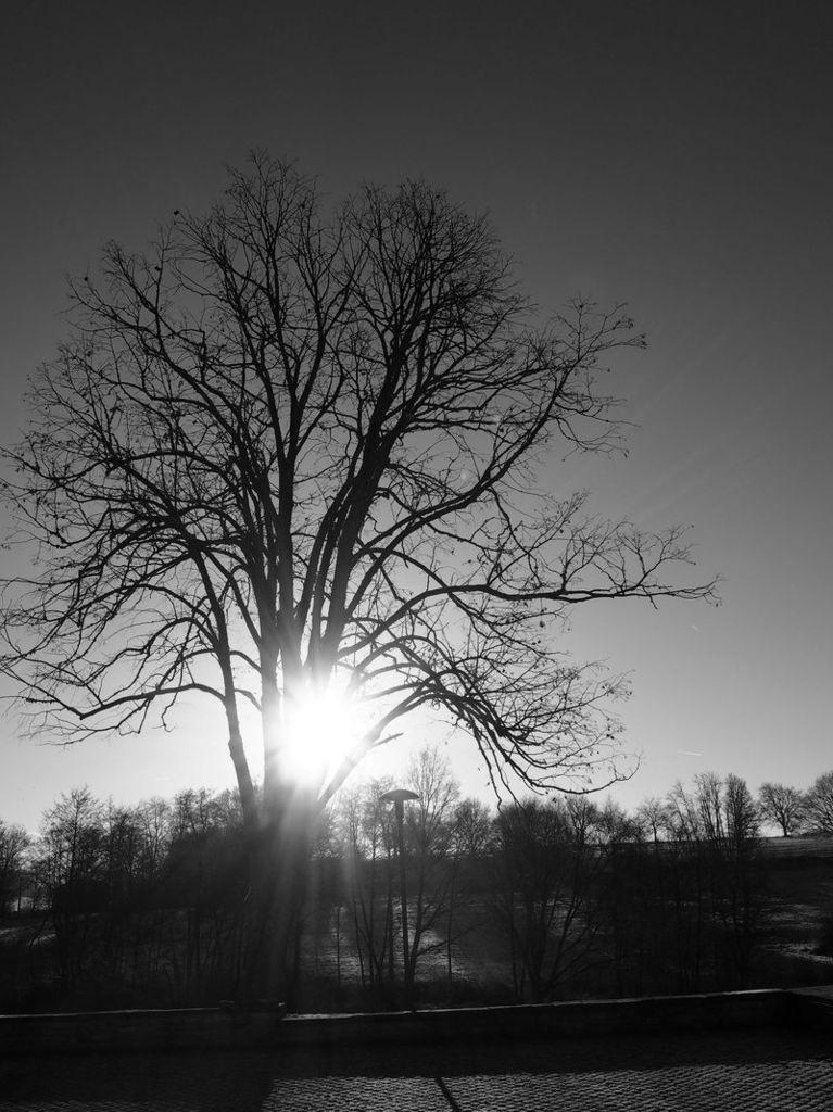 Lever de soleil devant la couveuse d'entreprise