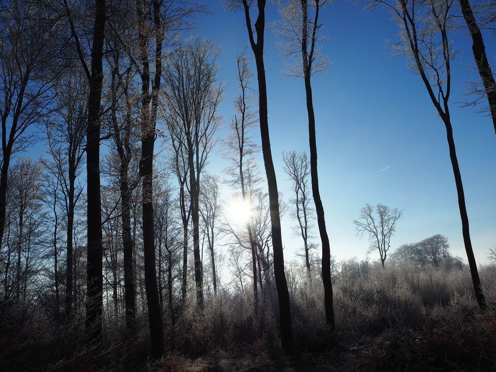 Givre aux Bouleaux et au Grand Bois