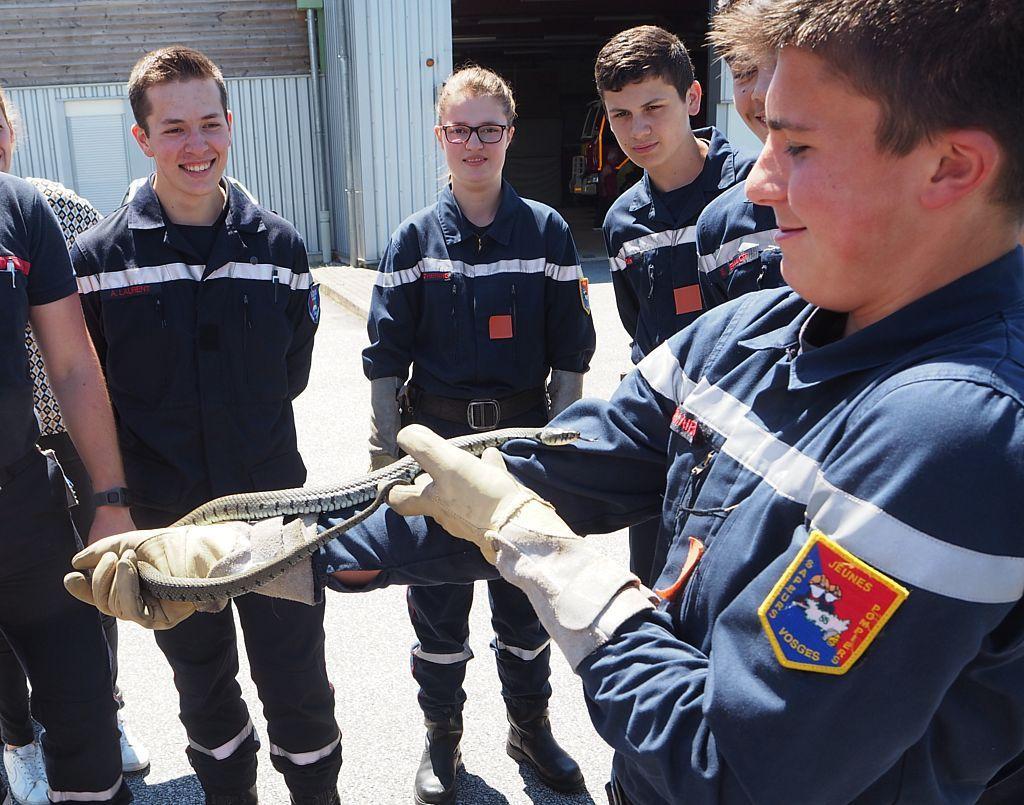 Formation animalière des Jeunes Sapeurs Pompiers