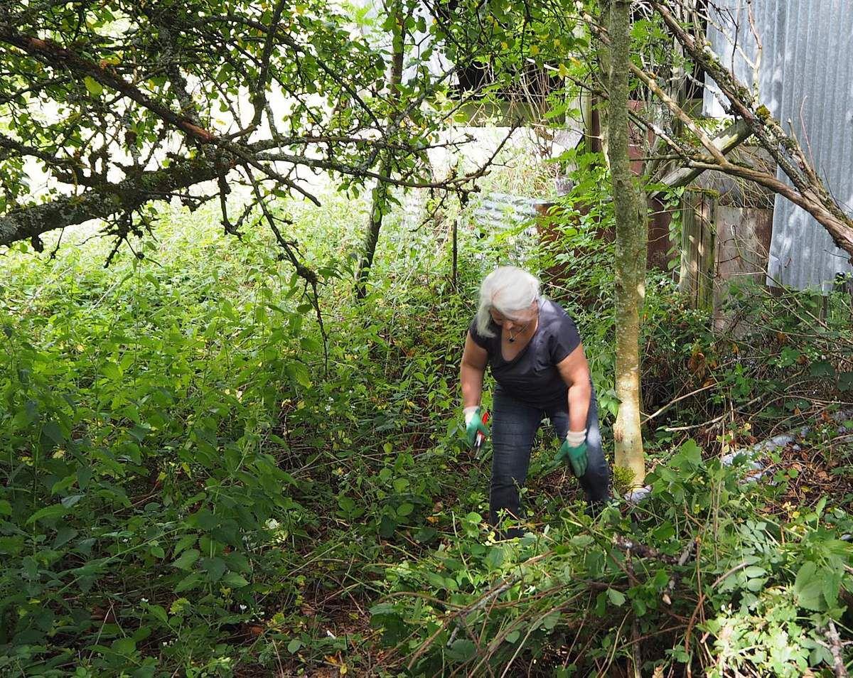 Nettoyage d'un verger de pommiers