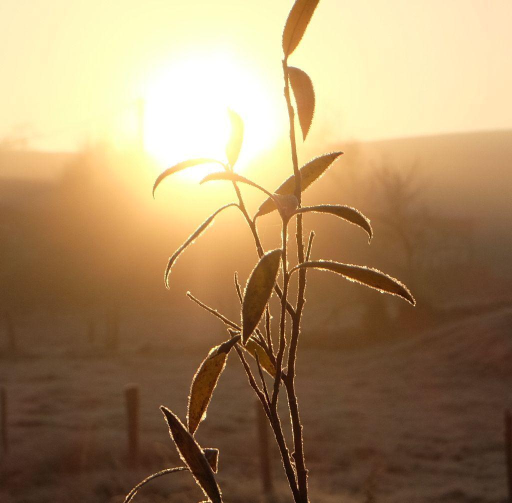 Soleil levant sur la Basse des Orges
