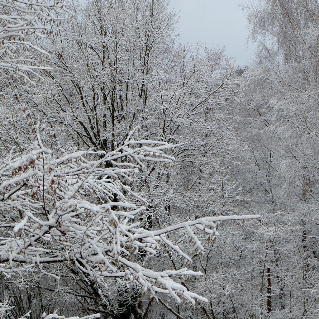 Neige et frimas au Chaudiron