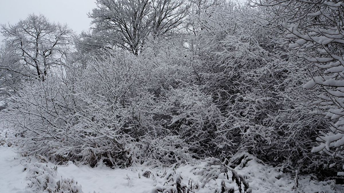 Premières neiges sur les yourtes en habitat groupé
