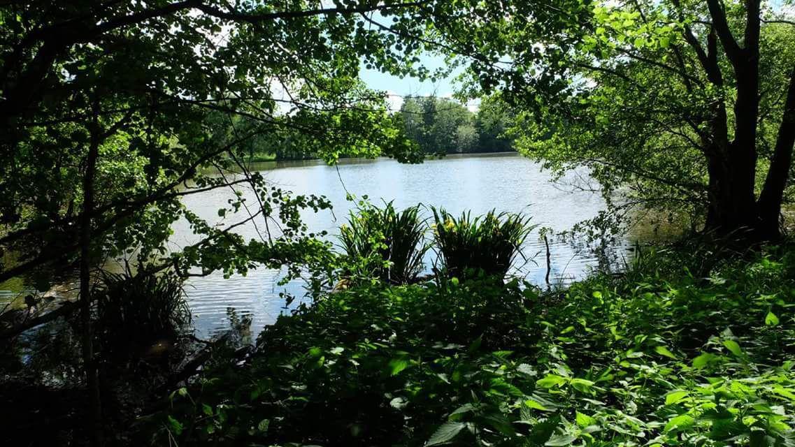 Les iris sauvages de l'étang Lallemand - Photos Claire Munier