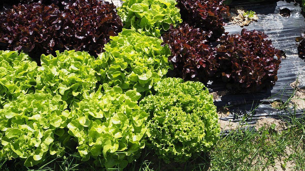 Une belle planche de salades
