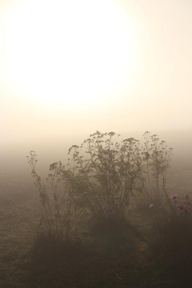 Brume à la Basse des Orges et à la Grande Fosse - Photos lesvoivres8824 - Sylvia Von Kaenel