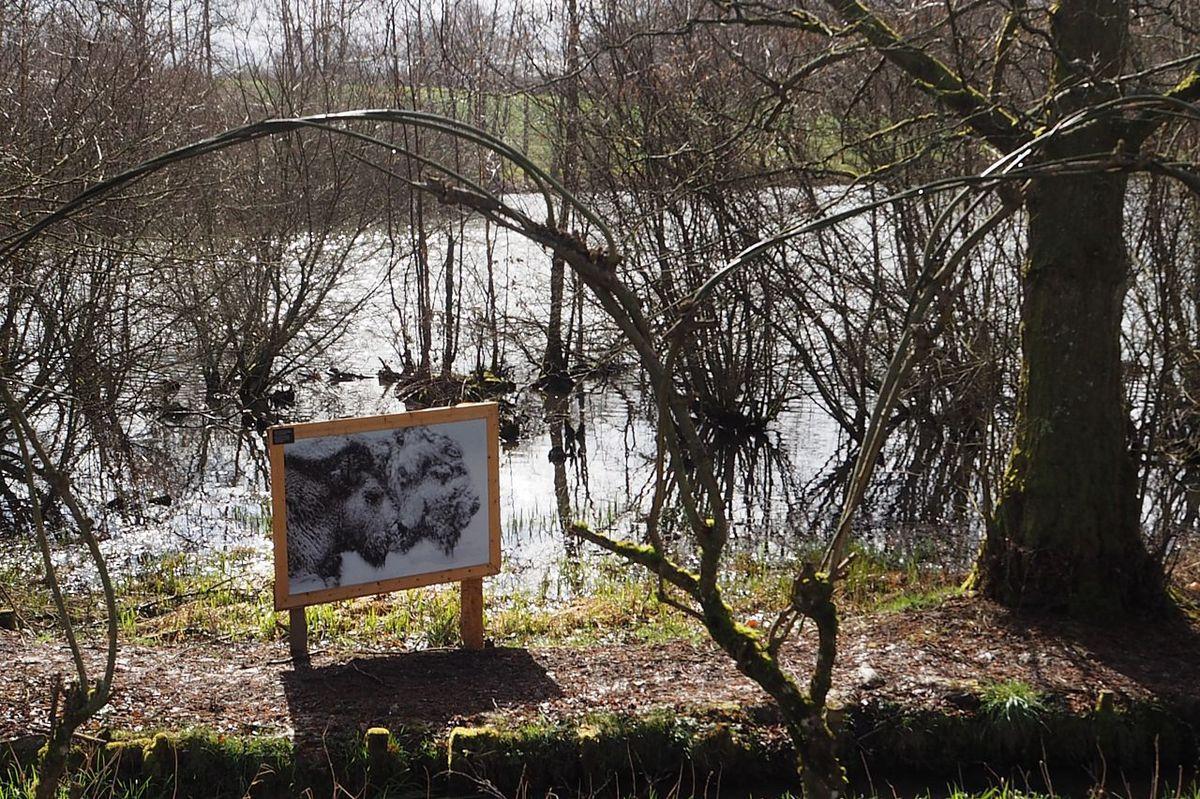 En passant par l'étang Lallemand
