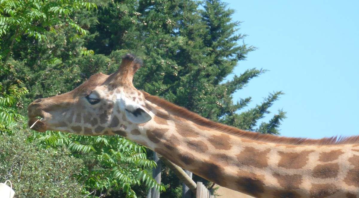 Sortie au Zoo de la Barben