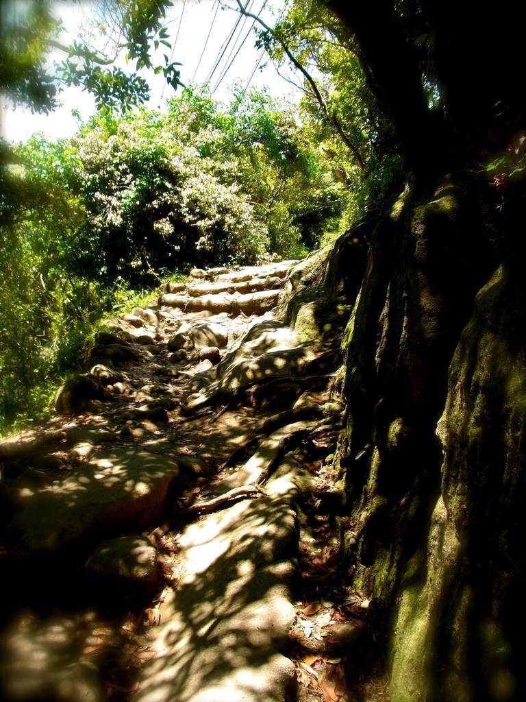 Puis un chemin forestier d'ombre et lumière au chant du rossignol (japonais!) et au léger parfum de vanille poudrée de fleurs sauvages