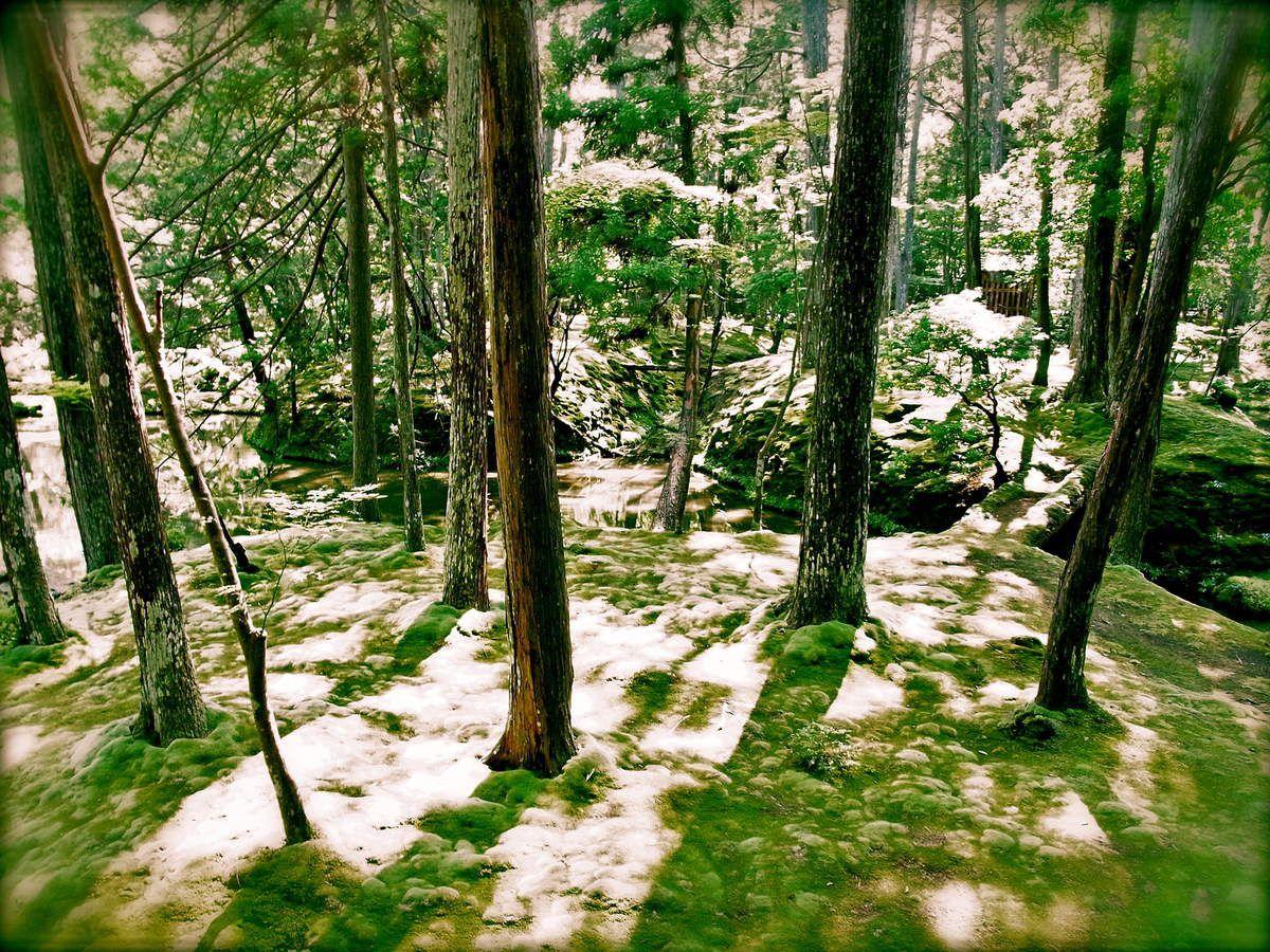 Kyôto : Le temple des mousses Kokèdèla 苔寺, ou officiellement Saihôji 西芳寺  UNESCO