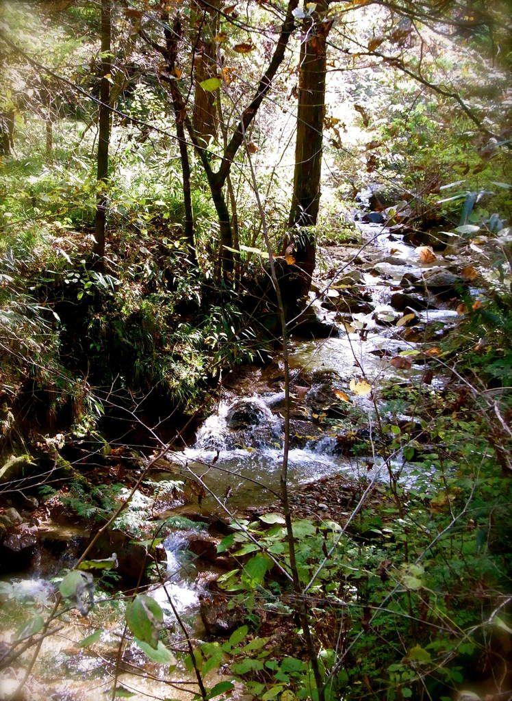 Quelques rivières, quelques cascades aux bruits frais et énergiques