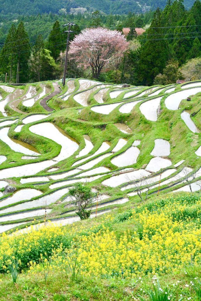 Préf. de Mié : Sud - Les rizières en terrasses de Maruyama 丸山千枚田