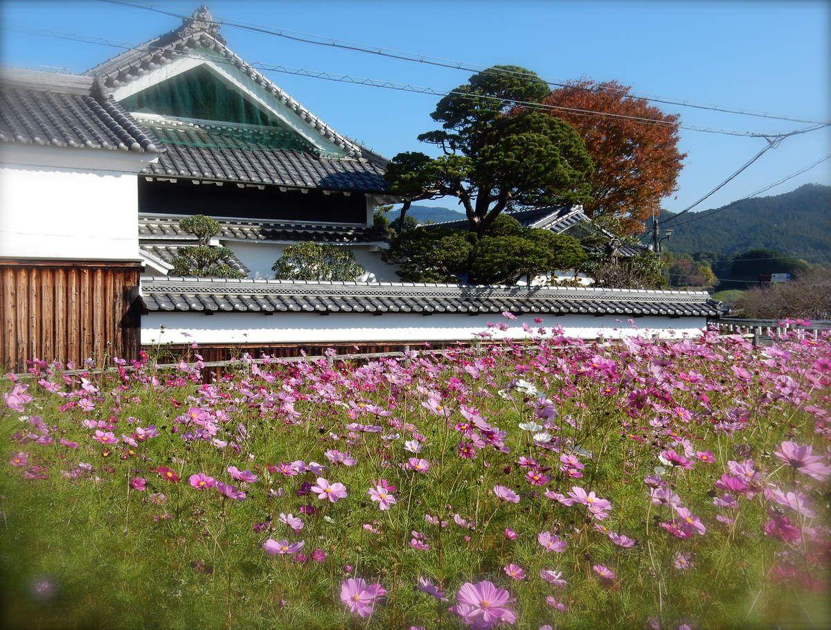 Préf. de Nara : Asuka : promenade dans la campagne automnale