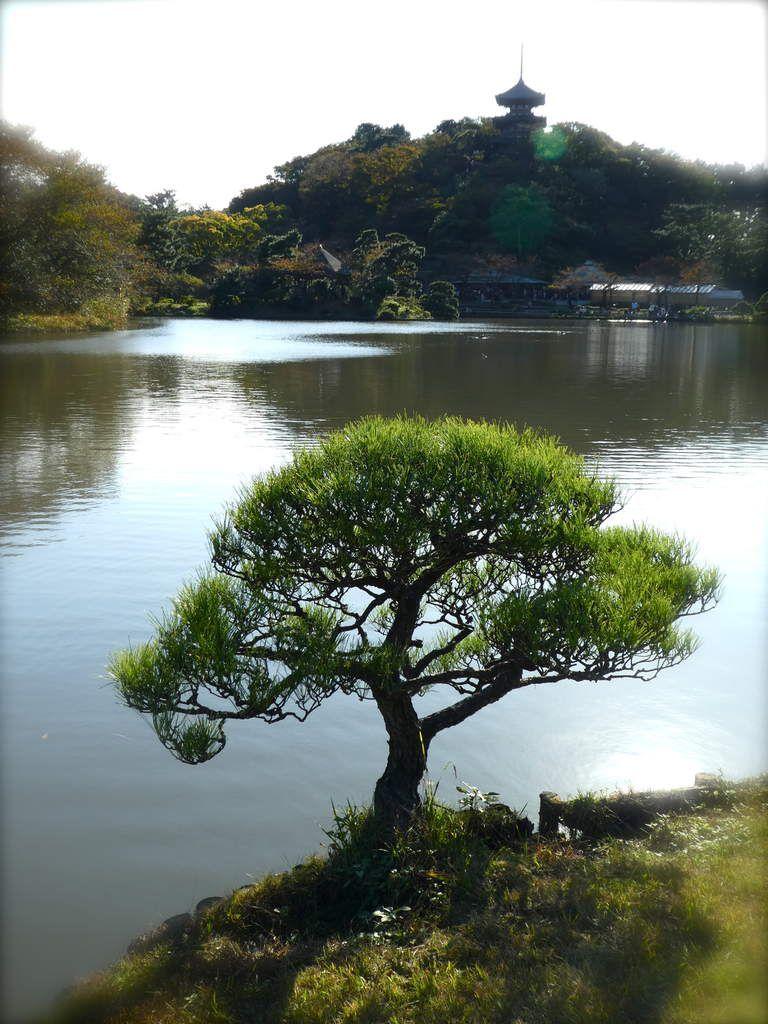 Préf. de Kanagawa : Yokohama - Le Sankei-èn 三渓園, un jardin traditionnel japonais