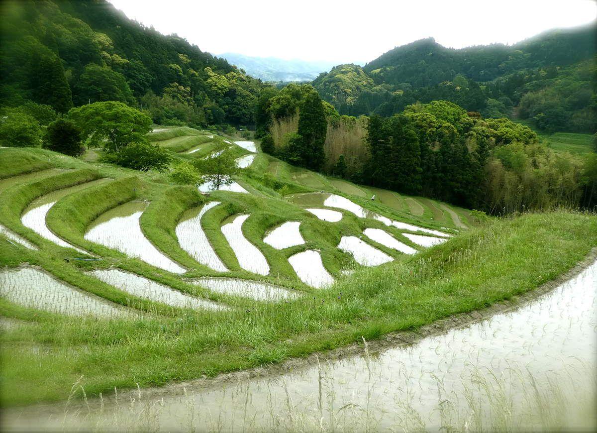 Préf. de Chiba: Les rizières en terrasse d'Oyama - La vaste plage aux rochers d'Emi 江見