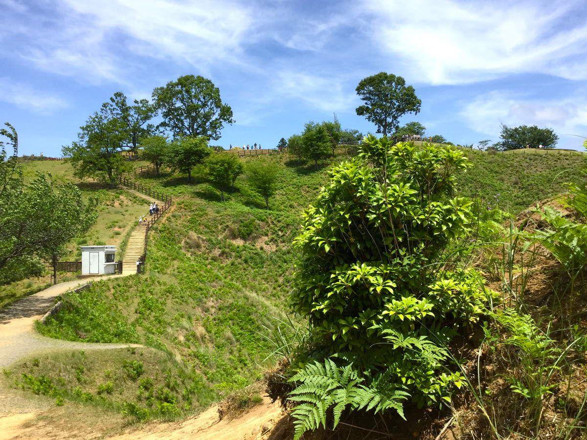 Préf. de Nara : Nara : L'ascension du mont Wakakusa