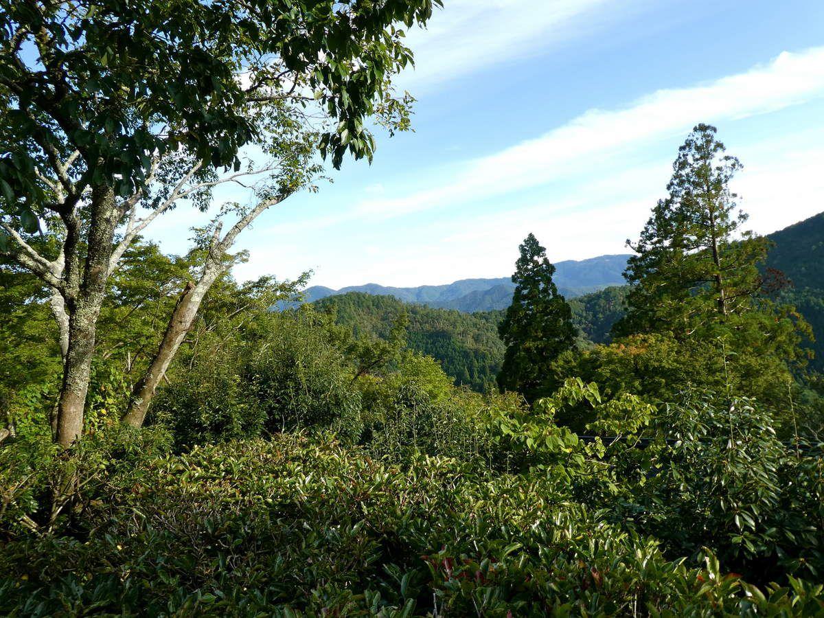 """Kyôto : Kurama 鞍馬, promenade """"énergisante"""" dans une forêt mystique"""