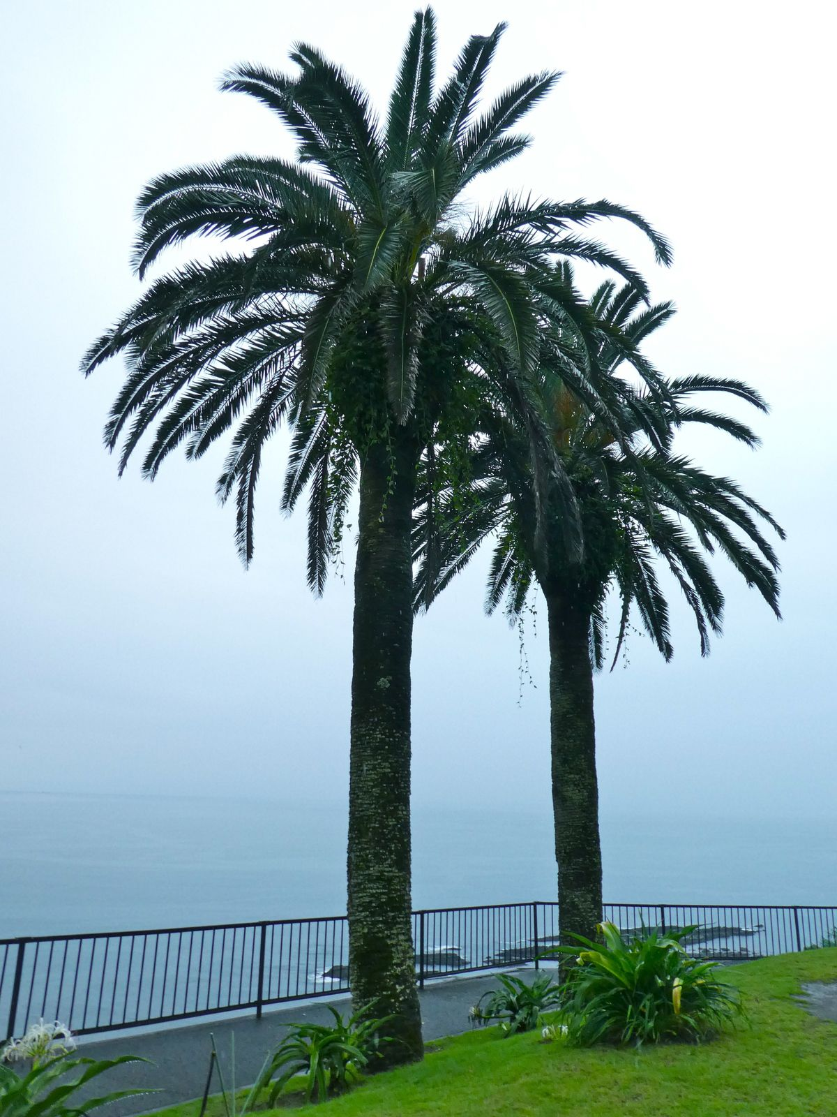Préf. de Miyazaki: La magnifique côte Pacifique de Nichinan