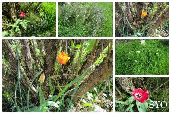 Nouvelles Herbes Aromatiques au Jardin de Fille