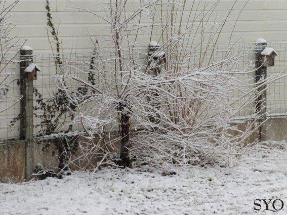 Petits Potins  neigeux de février, au Jardin de Fille