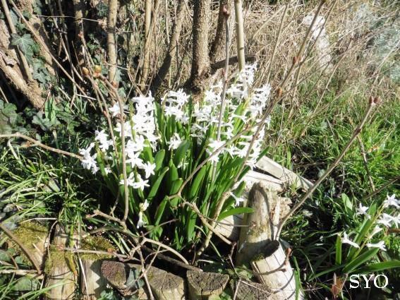 Le printemps arrive au Jardin de Fille