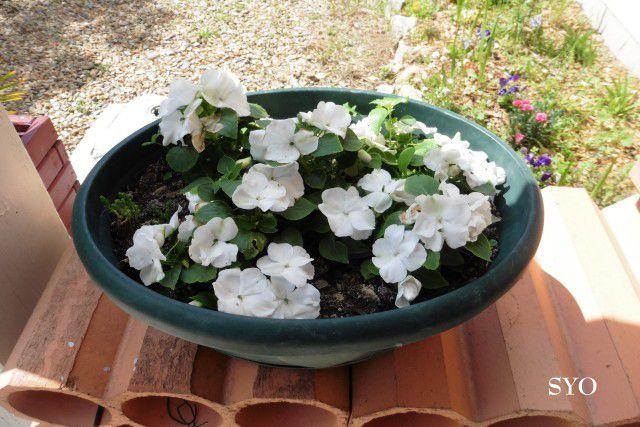 Jardin de Fille: nouvelles floraisons.