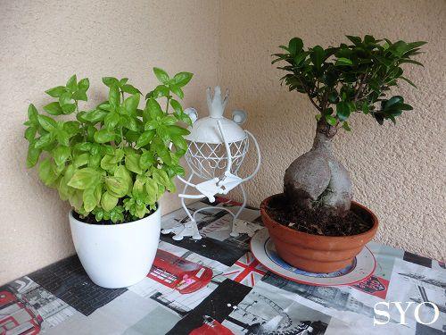 Mes plantes de la maison au Jardin de Fille