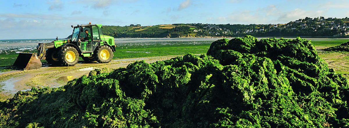 Algues vertes en Bretagne, d'après Les Échos
