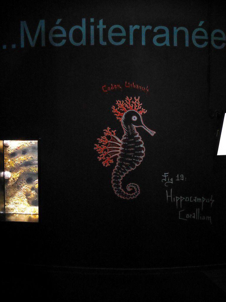 """Exposition """"Corail, coeur de vie"""" à l'Aquarium de Paris"""
