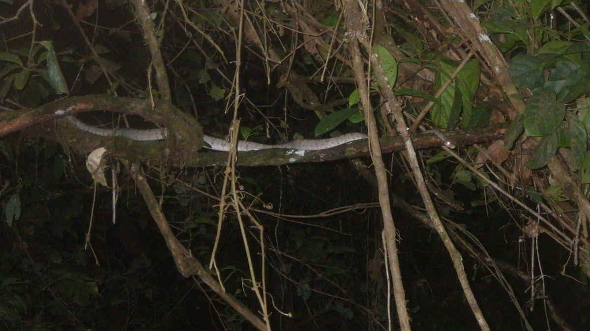 Chronique Guyanaise, un retour de nuit sur le fleuve, 5 avril 2014