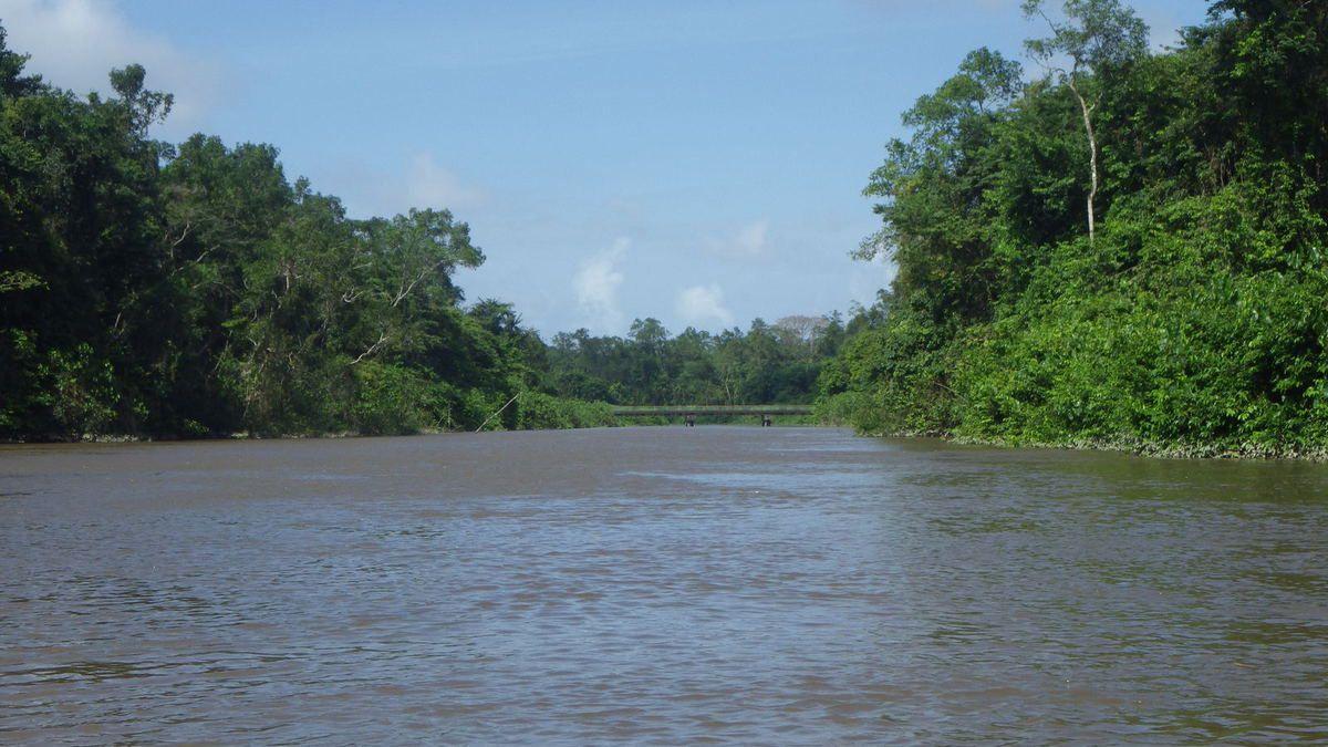 Chronique guyanaise, fin du premier séjour en forêt, 29 mars 2014