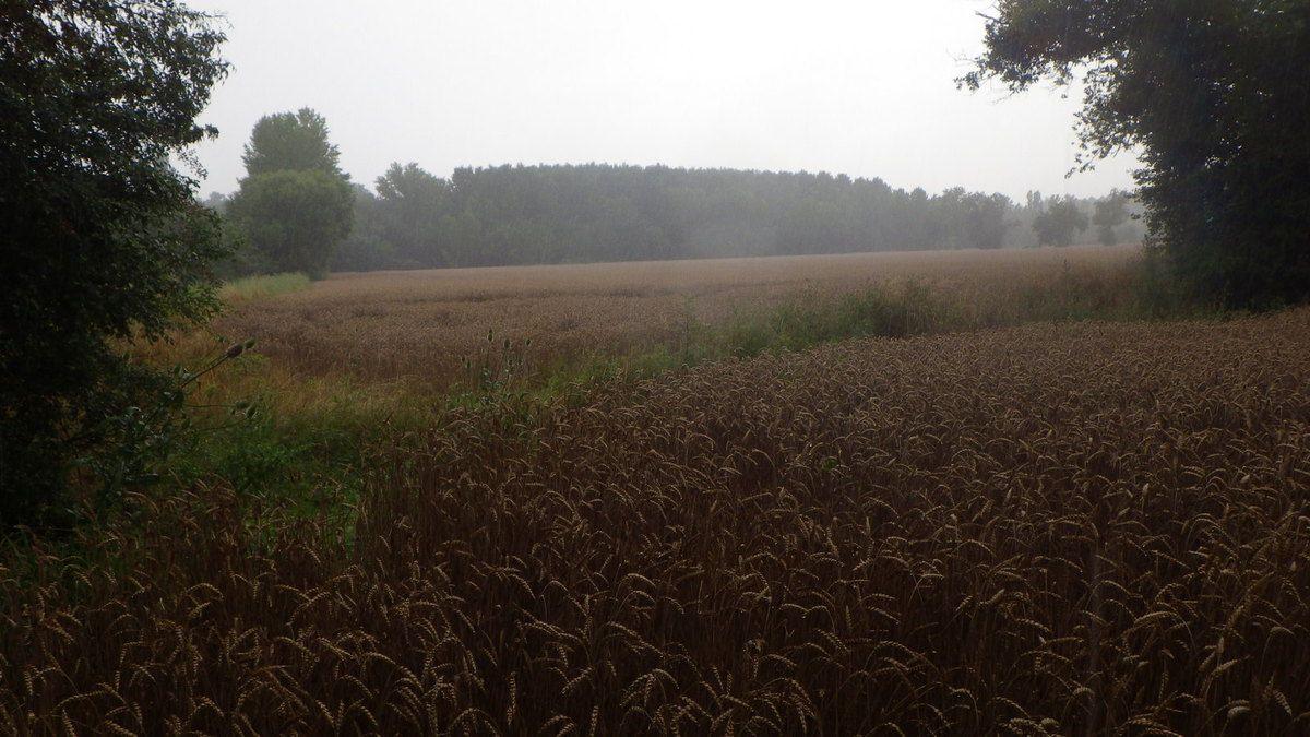Une approche rapide sous la pluie, 8 juillet 2014