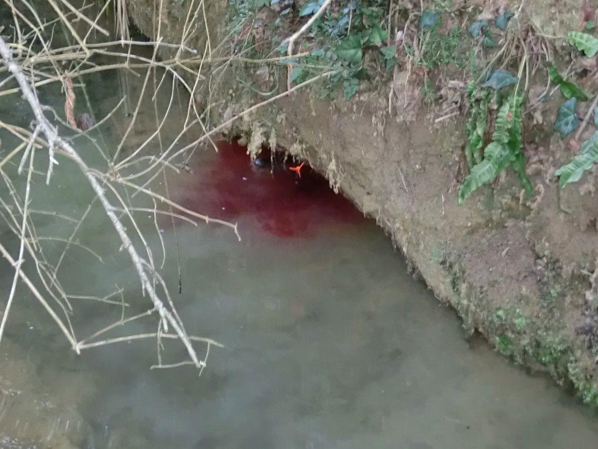 Une belle journée de chasse au ragondin, 25 mars 2012