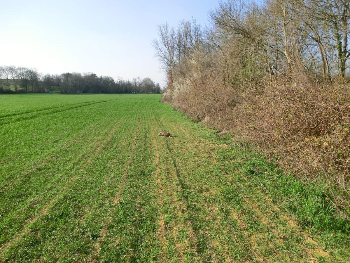 La chasse à l'arc ce n'est jamais gagné, 28 mars 2012