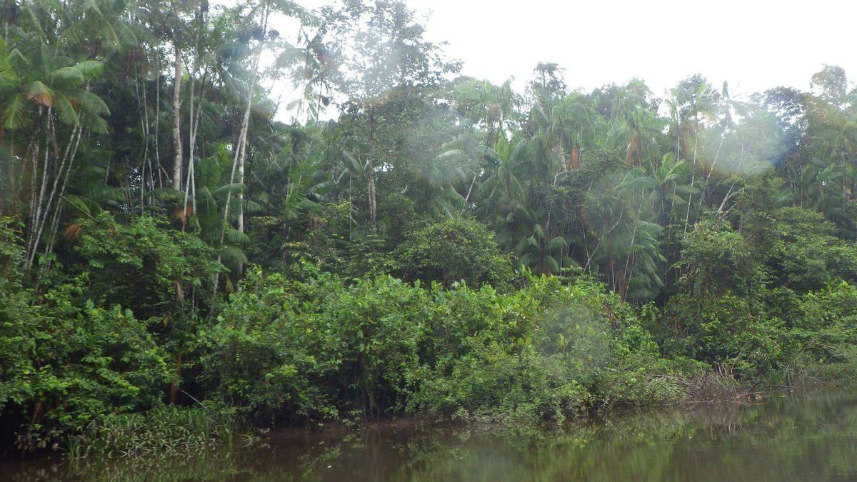 Chronique guyanaise, départ pour la forêt, 14 mars 2015